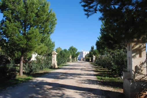 Masseria Montenapoleone, allée