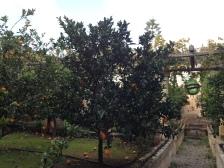 Masseria Montenapoleone, orangerais