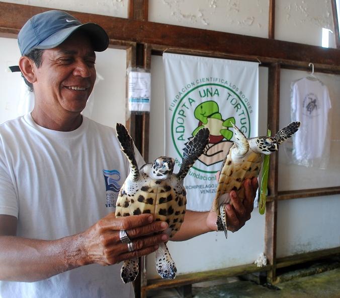 adopta una tortuga