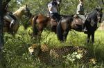 Big_Five_Horse_Safari_foto_1031627052