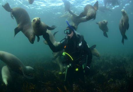 Plonger avec les lions de mer dans la Pénisule de Valdès