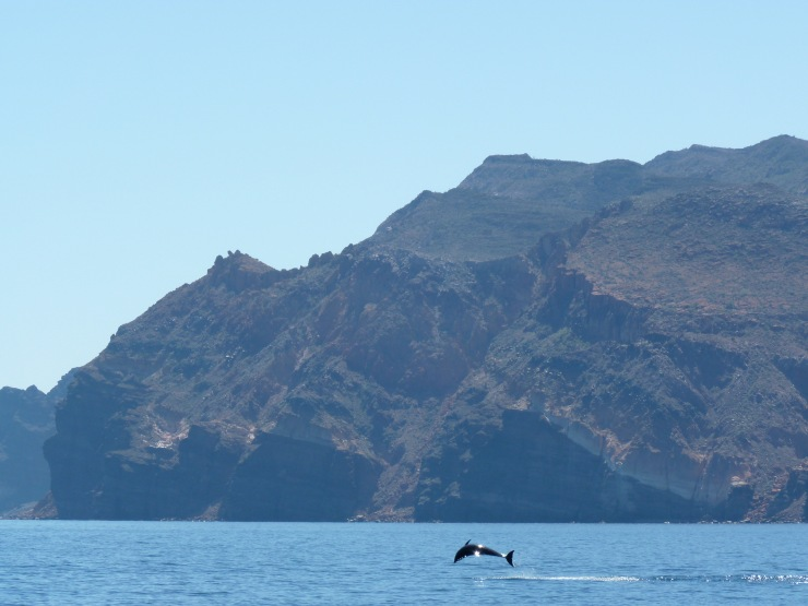 dolphin baja california