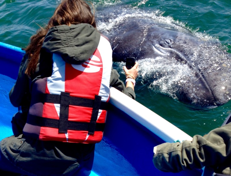 whales baja california